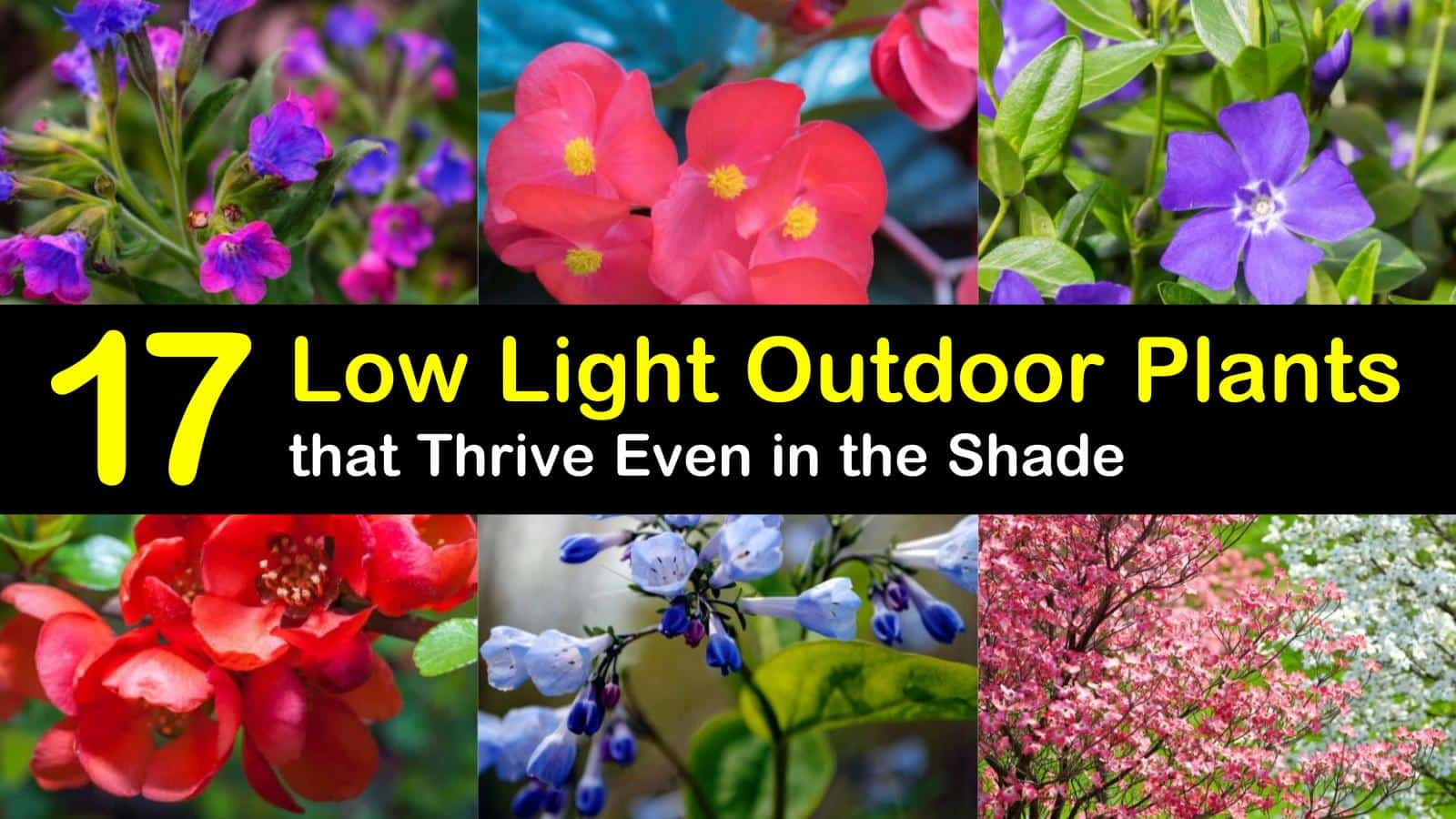 17 Low Light Outdoor Plants That Thrive Even In The Shade