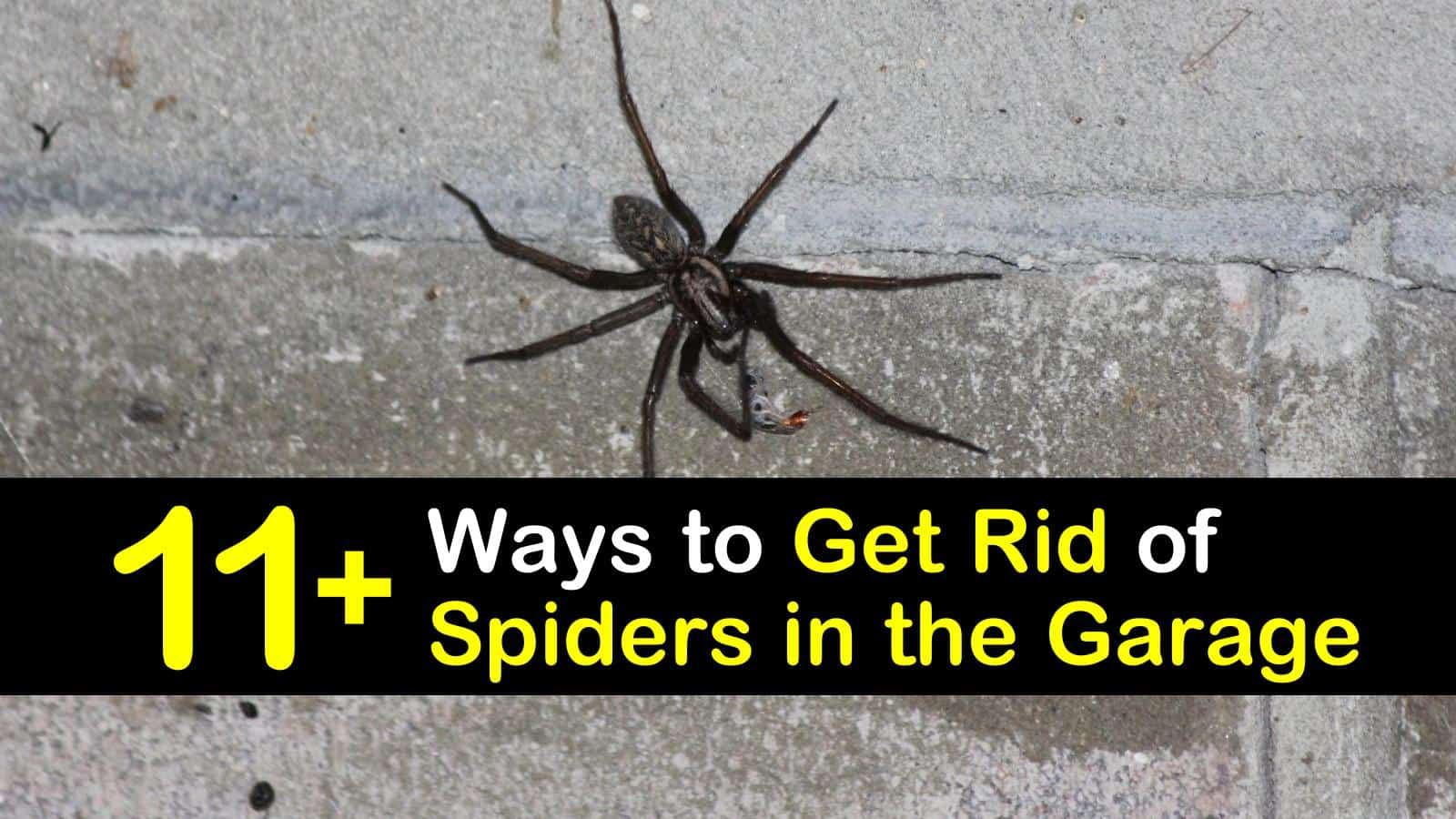 11 Clever Ways To Get Rid Of Spiders In The Garage