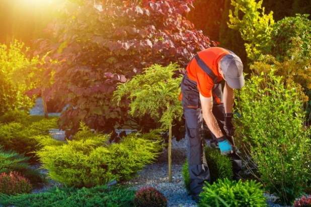 Gardening Without a Plan