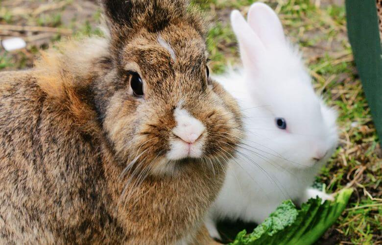 konijnen tips warmte