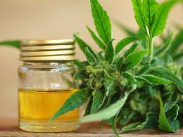 Cannabis oil and hemp oil