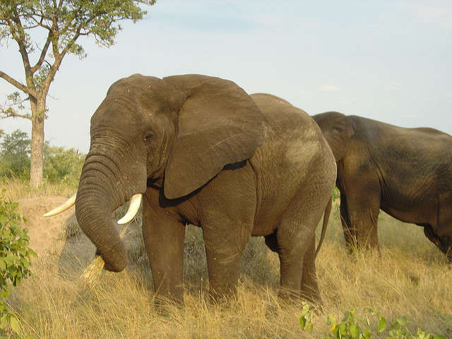Elephants in Sabi Sands Private Game Reserve South Africa