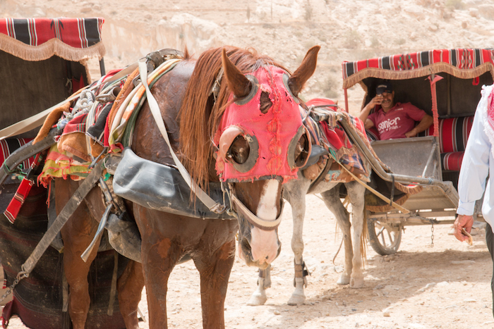 Horse-drawn Carriage Petra Jordan