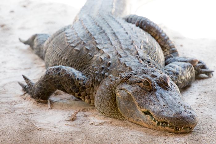 Everglades Safari Park Florida-14