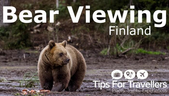 bear-viewing-yt