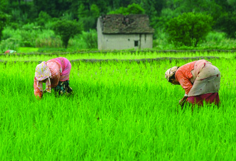 How to do farming business in Nepal