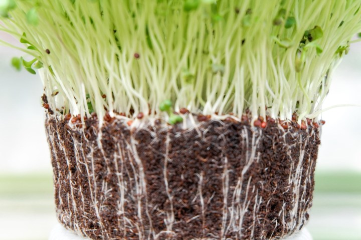 How to Grow Bean Sprout at Home- The Easy 5 Step Process