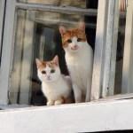 Cara Membantu Kucing Peliharaan Beradaptasi dengan Rumah Baru