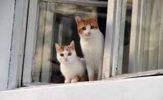 kucing di jendela