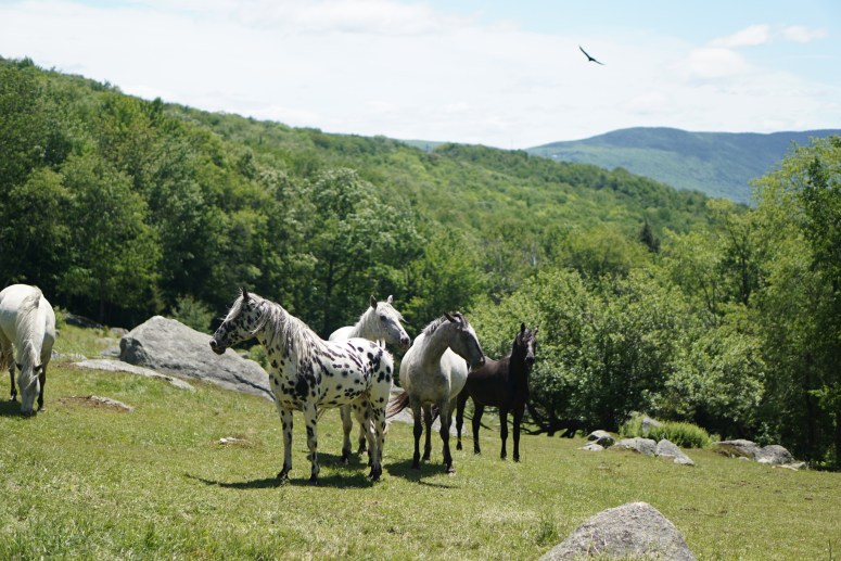 A hawk and horses, just over the summit