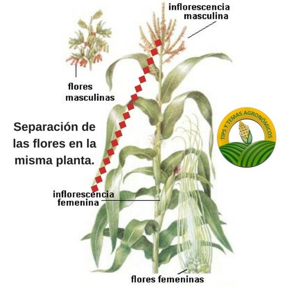 Plantas Monoicas Hermafroditas Y Dioicas
