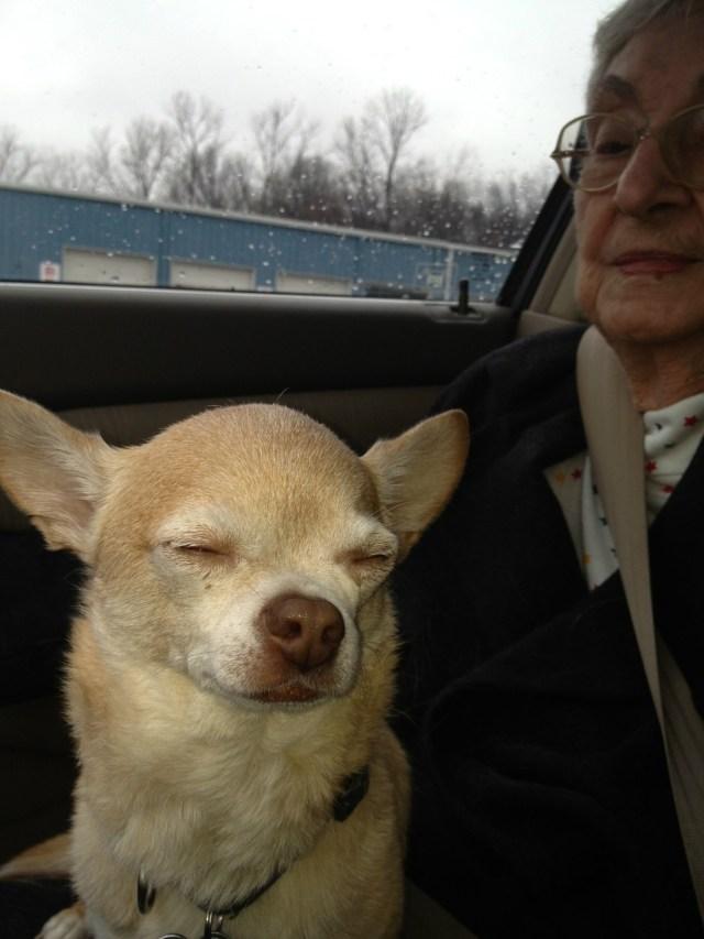 """Dorthy Allyson """"Dot"""" Hogan Cottam Dog"""
