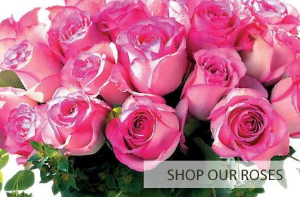 Shop Our Roses