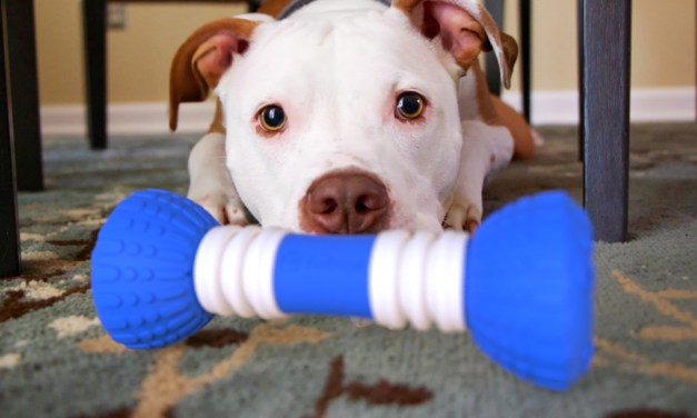 GoBone Toy For Dogs – Review