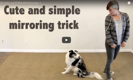 Clicker Training Mirroring Trick  – Cute and Easy Dog Trick