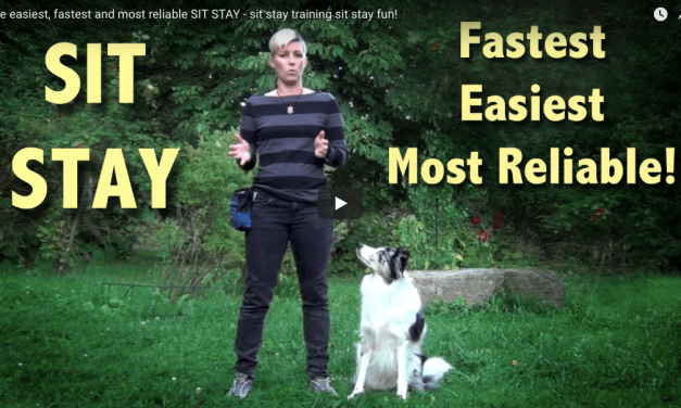 Clicker Training Sit Stay | Teach Your Dog Basic Obedience