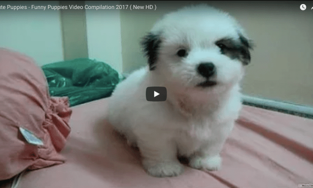 Puppy Video Compilation 2