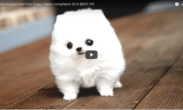 Puppy Video Compilation 3