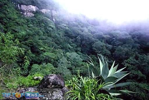 montecristo forest Top 10 Biggest and Popular Rainforests in The World