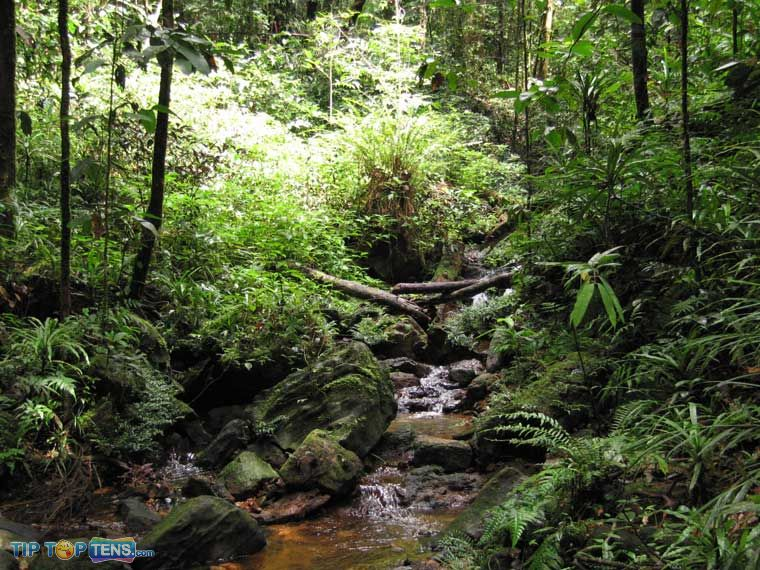 sinharaja forest Top 10 Biggest and Popular Rainforests in The World