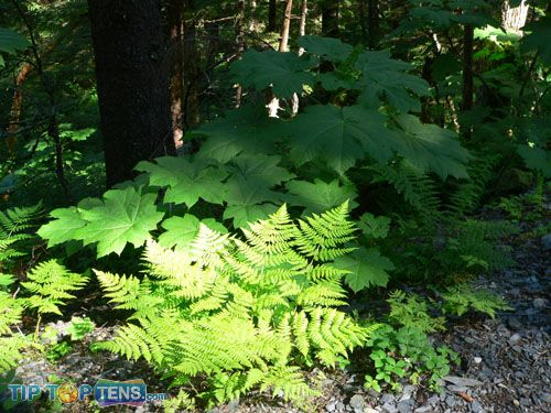 southeast alaska rainforest Top 10 Biggest and Popular Rainforests in The World