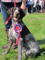 Tiree Show 2013 Champion Dog