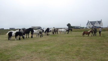 Pony Young Handlers