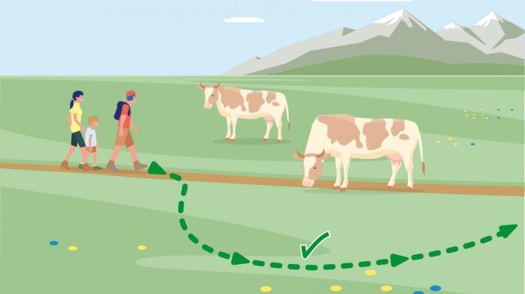 Regole importanti nel comportamento con gli animali al pascolo - Vacanze  tra le malghe - Attività | Tirolo austriaco