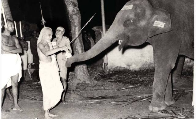 Kanchi Paramacharya With The Temple Elephant