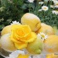 Tischdeko Zitronenfest