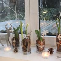 Winterdekoration auf der Fensterbank mit Blumenzwiebeln