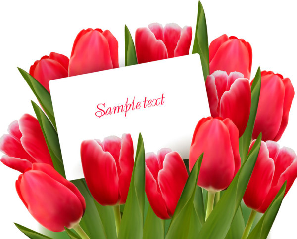 Valentine's Day Tulip Vector 01