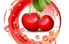 100 Natural Cherries Vector Illustration