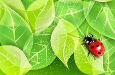 Spring Green Leaves Vector Background 03