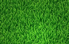 Vector Green Grass Background 01