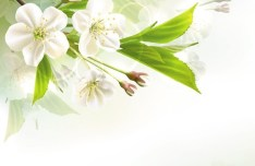 Fantastic Colorful Spring Flower Background 04