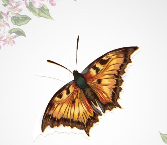 Vintage Spring Floral and Butterfly Background 03