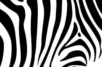 Vector Zebra Design Pattern
