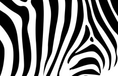Vector Zebra Design Pattern