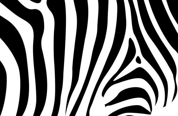 Zebra pattern vector - photo#32
