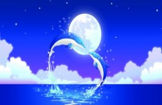 Romantic Blue Dolphins Jumping Out Of The Water