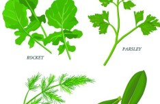 Collection Of Green Herbals Vector 02