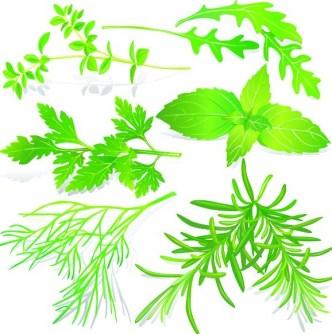 Collection Of Green Herbals Vector 05
