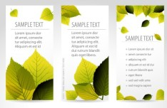 Vector Fresh Vertical Banners with Maple Leaf Background 01
