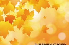 Shiny Autumn Maple Leaf Background Vector 04