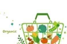 Vector Green Illustration Of Organic Foods 03