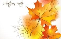 Autumn Yellow Maple Leaf Design Vector 01