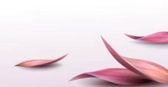 Fresh Flower Background Vector 04