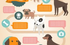 Flat Cartoon Dog Infographic Vector