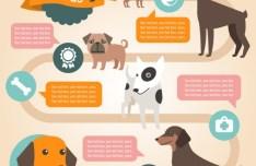 Flat Cartoon Dog Infographic Vector